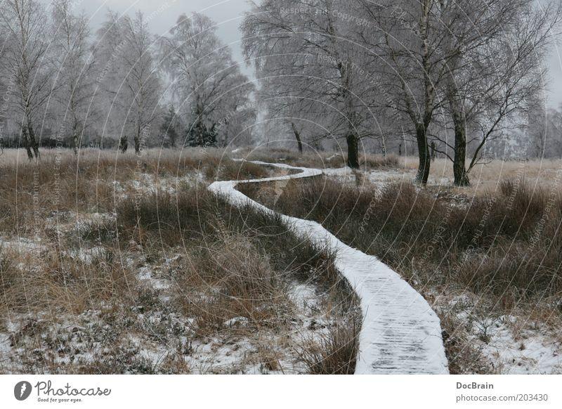 Winter im Hochmoor Natur Moor Sumpf Wege & Pfade ruhig demütig Hohes Venn Winterstimmung Einsamkeit Farbfoto Gedeckte Farben Außenaufnahme Menschenleer Tag