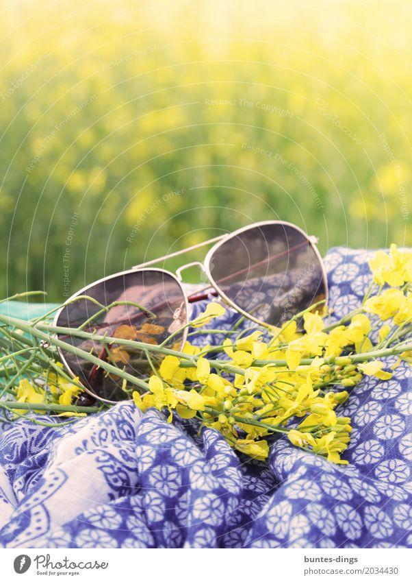 Sonnenbrille Lifestyle Freude Zufriedenheit Erholung ruhig Ferien & Urlaub & Reisen Ausflug Freiheit Sommer Sommerurlaub Sonnenbad Natur Landschaft Pflanze