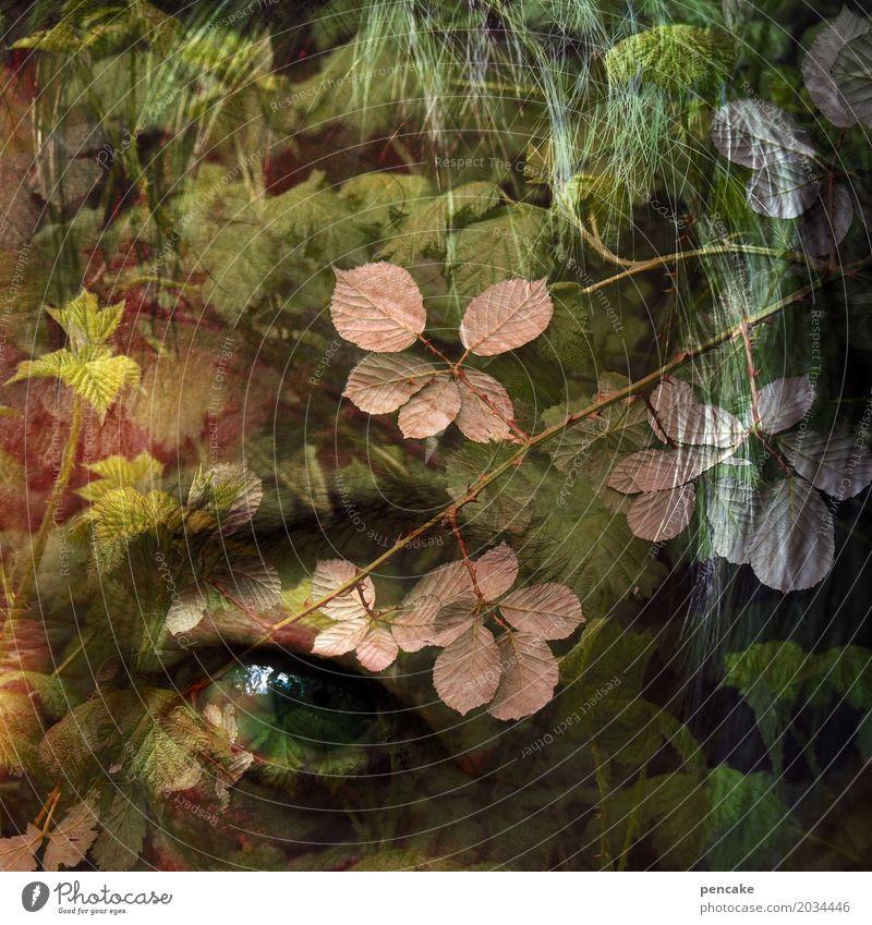 innere stimme Mensch Natur alt Pflanze Blatt Wald Auge außergewöhnlich Sträucher Meditation Doppelbelichtung Seele Meerestiefe