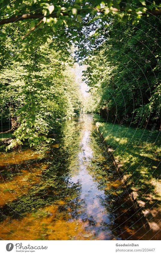 analoge Himmelspassage Natur Wasser Baum Pflanze Gefühle Landschaft Stimmung Wetter Umwelt Erde Klima Schönes Wetter Bach Flussufer Geäst Licht