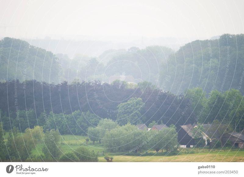 niederländisch ruhig Ferne Freiheit Bauernhof Umwelt Natur Landschaft Pflanze Luft Himmel Herbst Klima Wetter schlechtes Wetter Nebel Baum Gras Dorf alt