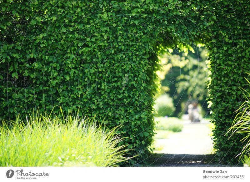 Haben sie einen weißen Hasen mit einer Uhr gesehen? Natur Pflanze Gefühle Frühling Park hell Stimmung Wetter Umwelt Wachstum Klima Gras Schönes Wetter Hecke Durchblick Durchgang