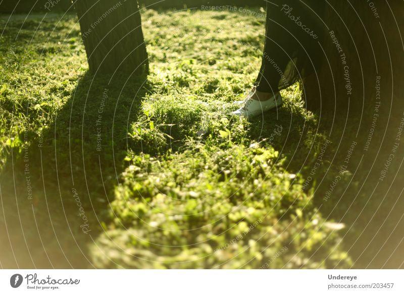 Sonnenbaum Mensch 1 Beine Fuß Schuhe Baum Sonnenuntergang Gras grün stumm Schatten Farbfoto Abend Tag