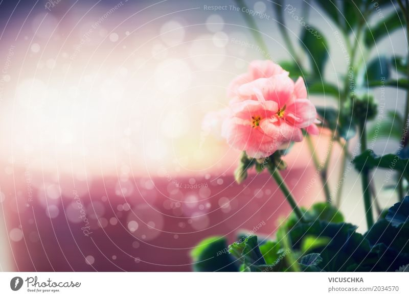 Pastell rosa Blume, Natur Hintergrund Design Sommer Garten Pflanze Sonnenlicht Schönes Wetter Blatt Blüte Park gelb Hintergrundbild Pastellton Unschärfe schön