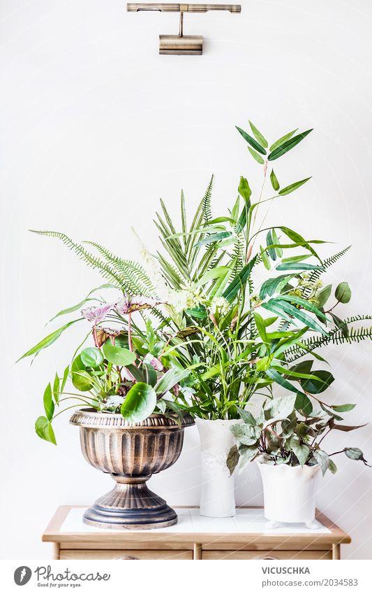 Zimmer Pflanzen für Urban Jungle Stil Design Freizeit & Hobby Häusliches Leben Wohnung Innenarchitektur Dekoration & Verzierung Raum Natur Sommer Blume Gras