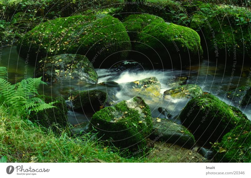 Bach England Nationalpark Stein Felsen Wasser Dartmoor Moos