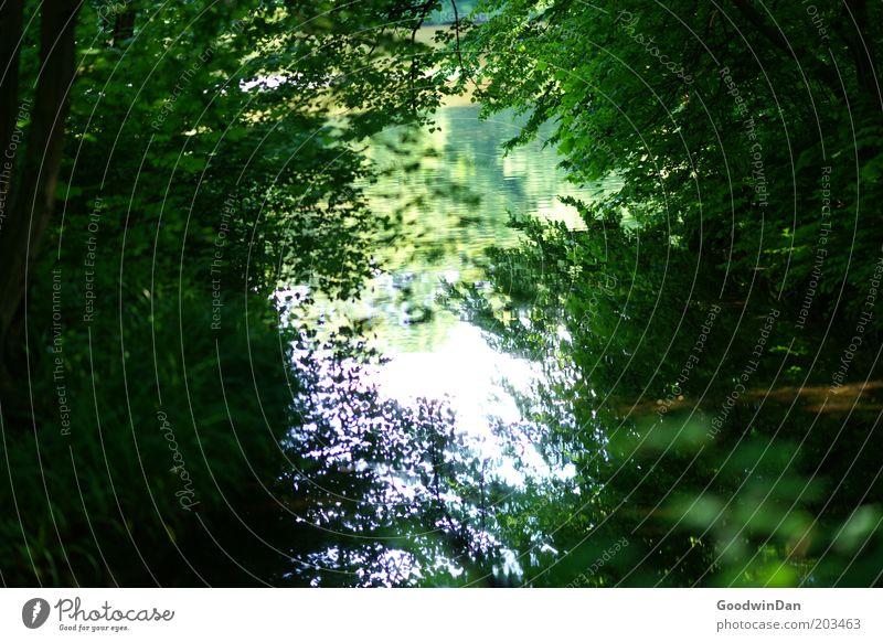 digitale Himmelspassage Umwelt Natur Landschaft Pflanze Wasser Frühling Klima Schönes Wetter Bach Wachstum dunkel schön Gefühle Frühlingsgefühle Farbfoto