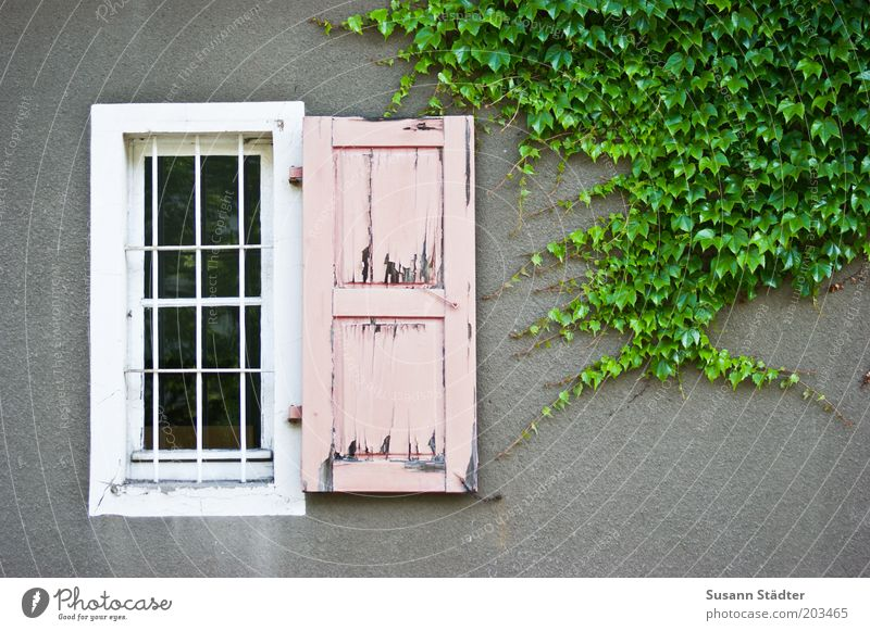 Barbieknast Natur Blatt Wand Fenster grau Mauer rosa Fassade kaputt Kitsch Putz Justizvollzugsanstalt Gitter Ranke Efeu Fensterladen