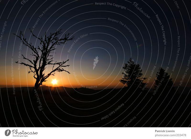 Gut Nacht! Umwelt Natur Landschaft Pflanze Himmel Horizont Sonne Sonnenaufgang Sonnenuntergang Sommer Schönes Wetter Baum Hügel Schwarzwald Nadelbaum blau ruhig