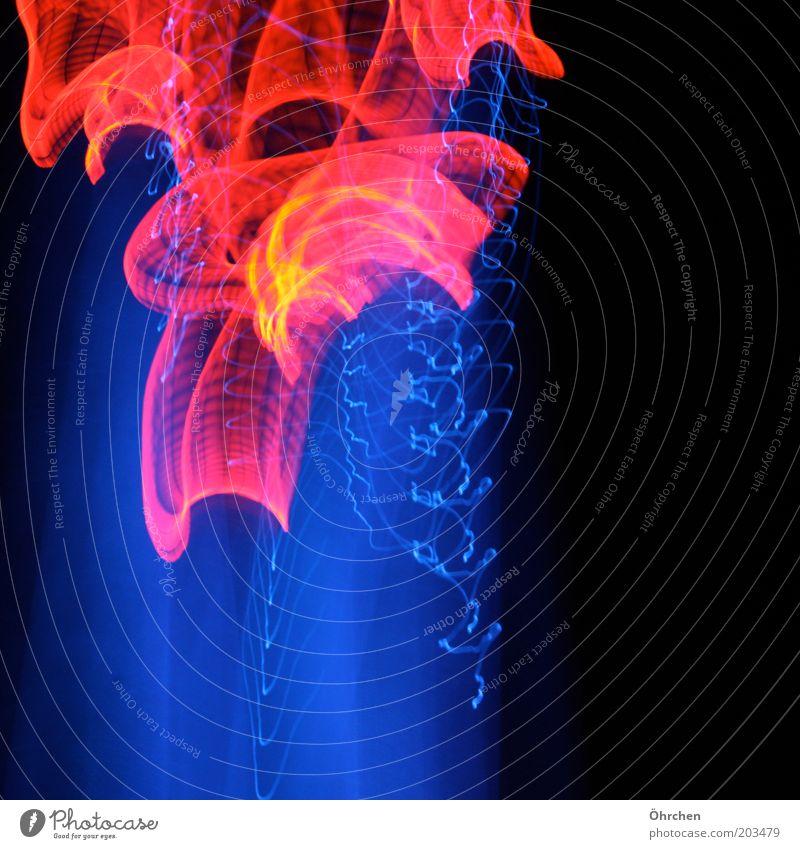 Spiel mit dem Feuer Nachtleben Kunst Ausstellung Kunstwerk Duisburg-Nord Industrieanlage Park Leuchtturm heiß blau rot schwarz Farbfoto Außenaufnahme Experiment
