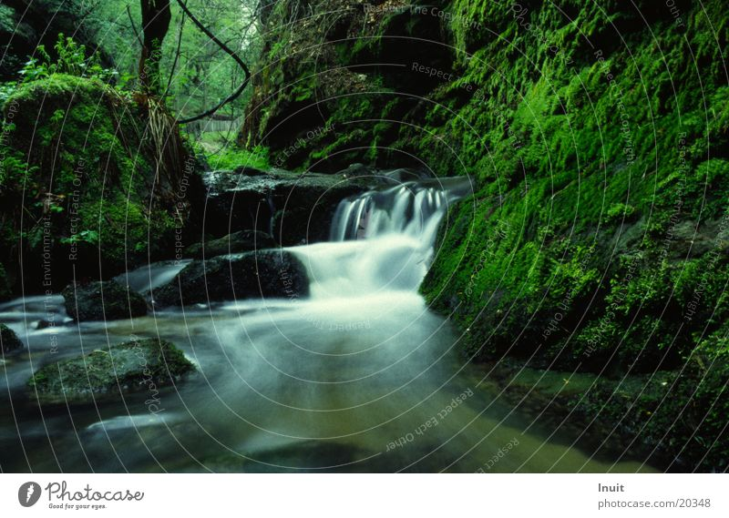 Bach 02 Wasser Idylle Moos