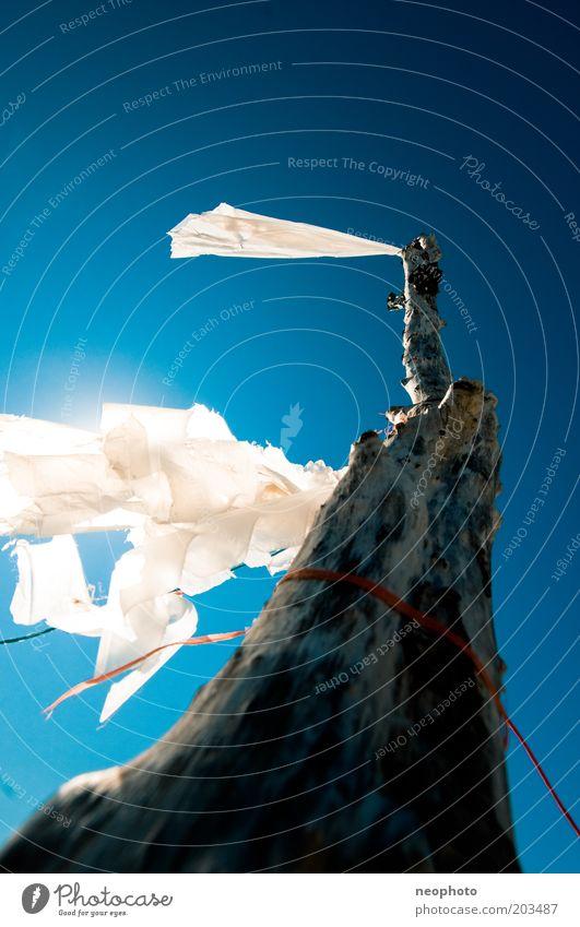 Zeichen geben Klimawandel Kraft Fahne Baumstamm weiß Himmel blau Frieden Freiheit Wind flattern Farbfoto Außenaufnahme Menschenleer Textfreiraum oben