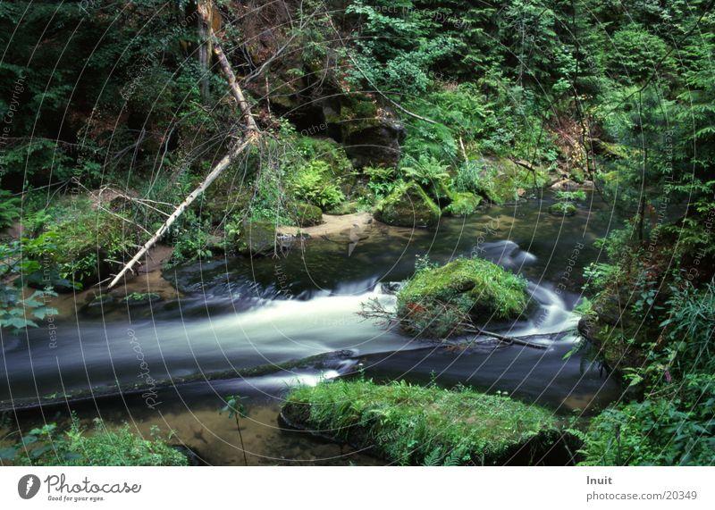 Bach 03 Wasser Moos Nationalpark Böhmen