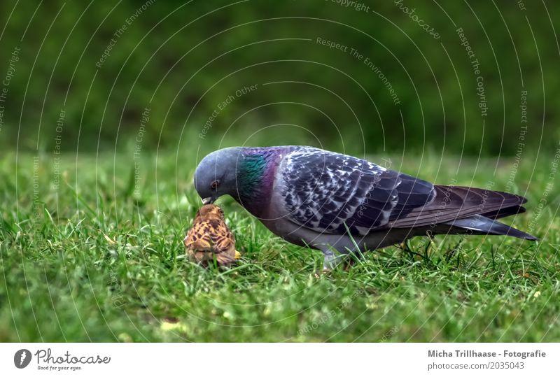 Taube und Spatz Natur Pflanze blau grün Tier Umwelt lustig natürlich Gras klein braun Vogel orange Zusammensein Freundschaft Wildtier