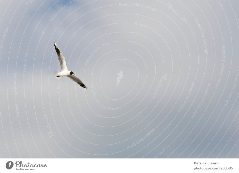 schwerelos Natur schön Himmel blau Sommer schwarz Wolken Tier Luft Vogel fliegen Flügel Möwe Schweben Wattenmeer Schwerelosigkeit
