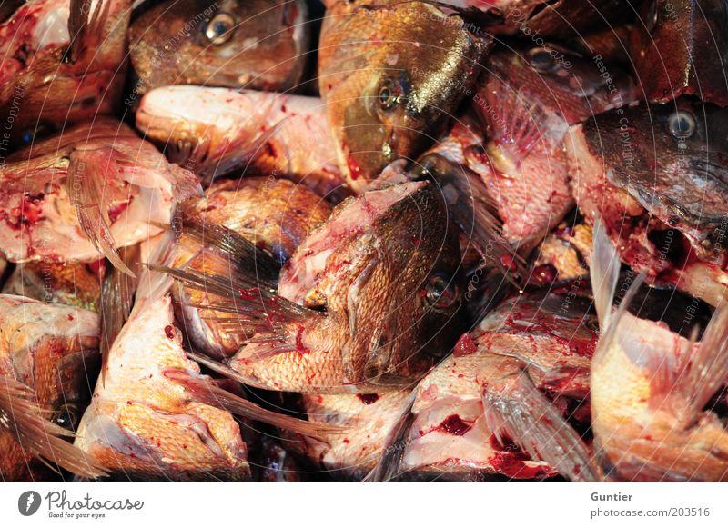 Nordlichter Tier Nutztier Totes Tier Fisch Schuppen Fischkopf dreckig schleimig rosa rot schwarz stinkend Fischgräte Blut Tod Flosse Maul Lebensmittel Ende