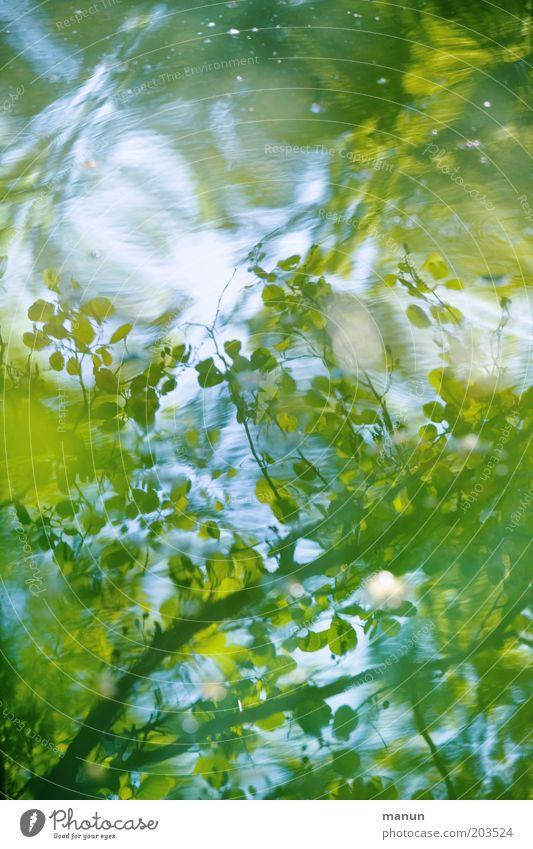 Wasserspiegel Natur blau grün Sommer Wasser Blatt Wald Frühling See frisch Idylle Wellen ästhetisch Seeufer Umweltschutz positiv