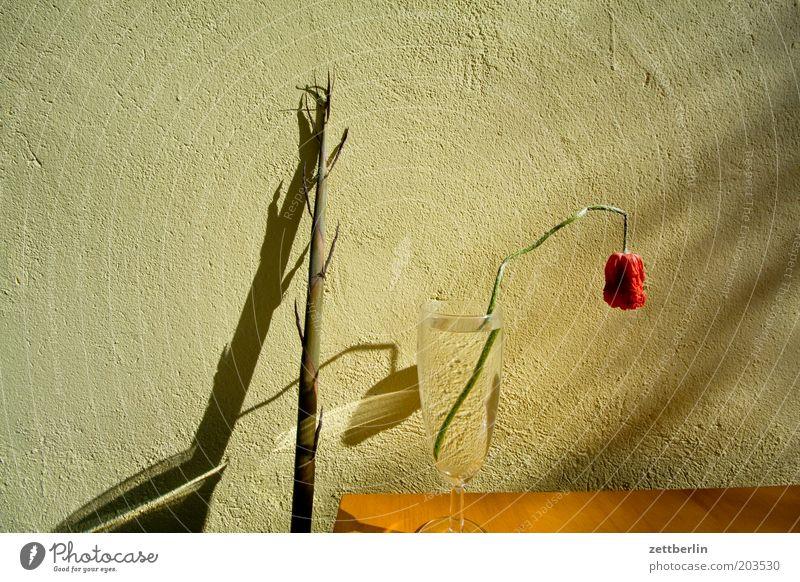 Bambus und Mohn Blume Bambusrohr Glas Wasser Wasserglas Wand Fassade Schatten Streiflicht Blüte verblüht Frühling Mohnblüte Trauer Traurigkeit