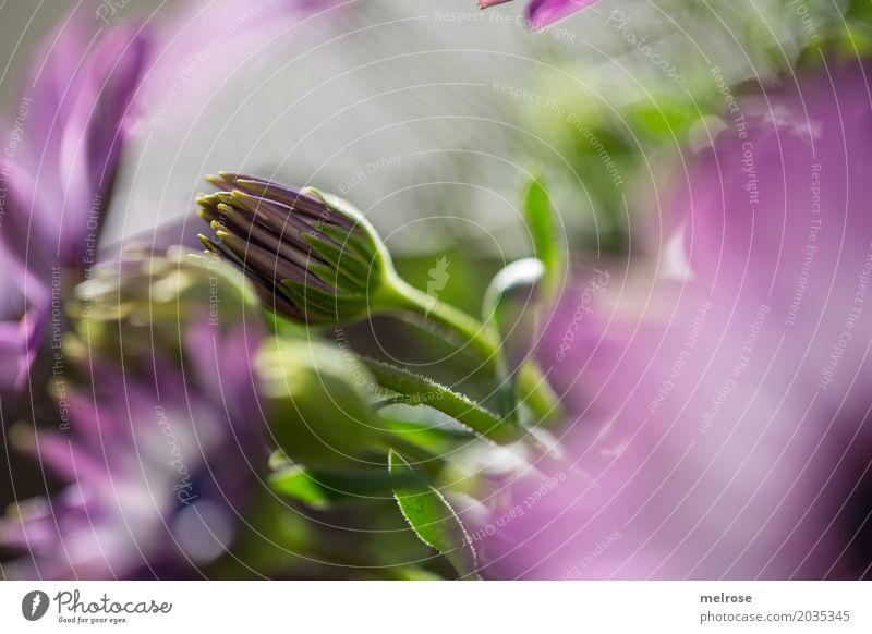 Neigung ... Natur Sonnenlicht Frühling Schönes Wetter Pflanze Blume Blatt Blüte Wildpflanze Topfpflanze Blütenknospen Blütenstiel Unschärfe Farbenspiel