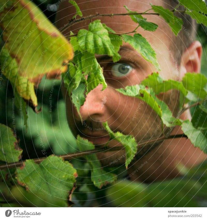 in the woods maskulin Junger Mann Jugendliche Gesicht Auge 1 Mensch 30-45 Jahre Erwachsene Natur Pflanze Sträucher Blatt Neugier Angst verstecken Versteck