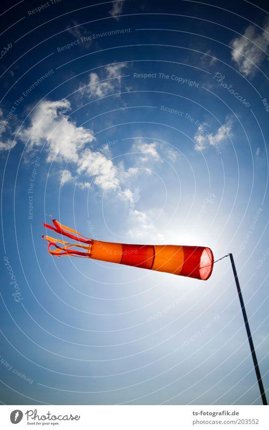 Ringelsocke auf Durchzug Natur Himmel Meer blau rot Wolken Ferne Freiheit Luft orange Wind Wetter Sturm Richtung Urelemente Schönes Wetter