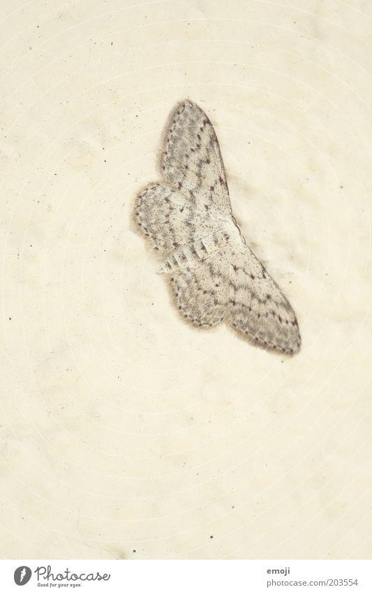 flattern Tier einfach Schmetterling flach Tarnung Strukturen & Formen Perspektive einfarbig