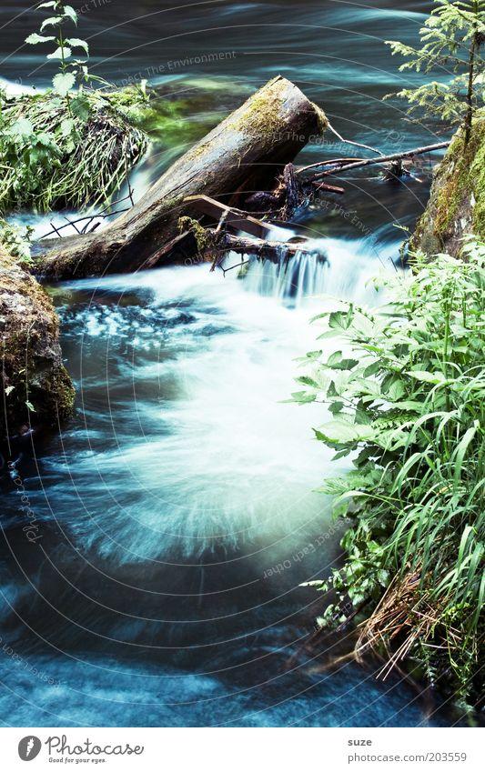 Wasseroase Natur Wasser schön Pflanze Sommer Umwelt Landschaft kalt Klima natürlich Wachstum Urelemente Idylle Fluss Schönes Wetter Baumstamm