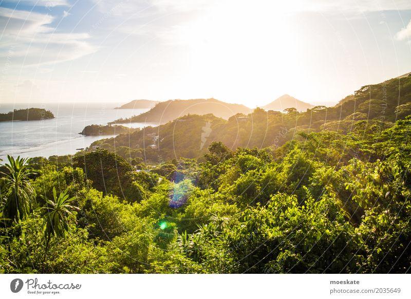 Sonnenuntergang Seychellen Mahe Island Umwelt Natur Landschaft Pflanze Wasser Himmel Wolken Sonnenaufgang Sonnenlicht Sommer Schönes Wetter Baum exotisch Wald
