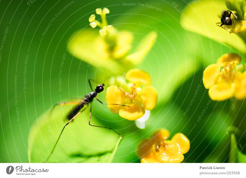 lass mich in Ruhe! Natur schön Blume grün Pflanze Tier gelb Blüte klein Insekt beobachten Jagd Flucht Konkurrenz Ameise