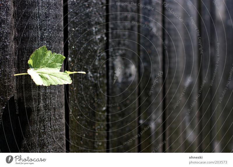 Zaun again Pflanze Blatt dunkel Garten Freiheit Holz Neugier Holzbrett Perspektive Lücke Frühlingsgefühle Barriere Bretterzaun