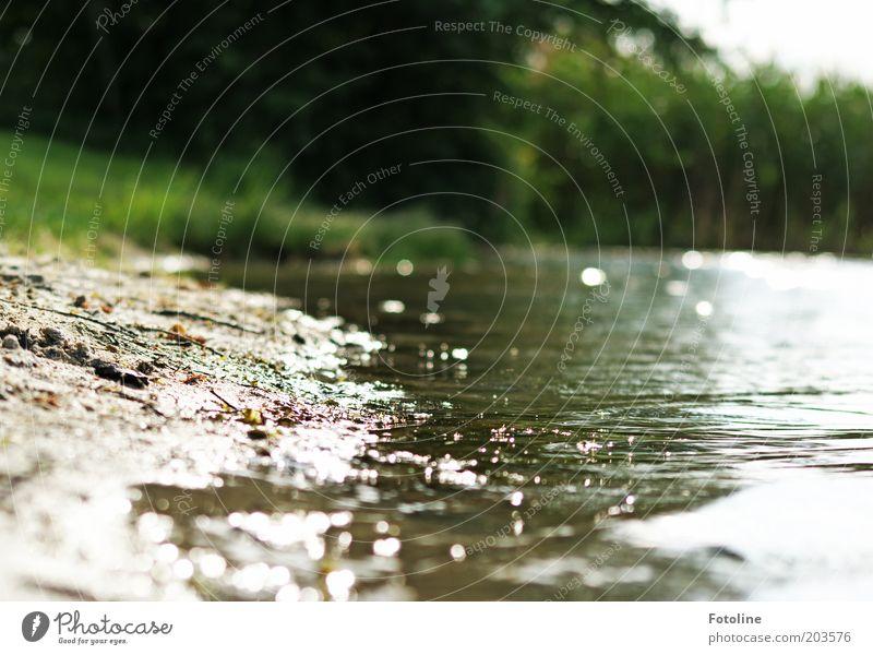 Sommer am See Natur Wasser Pflanze Park Wärme hell Küste Wetter Umwelt Klima heiß Seeufer Schönes Wetter