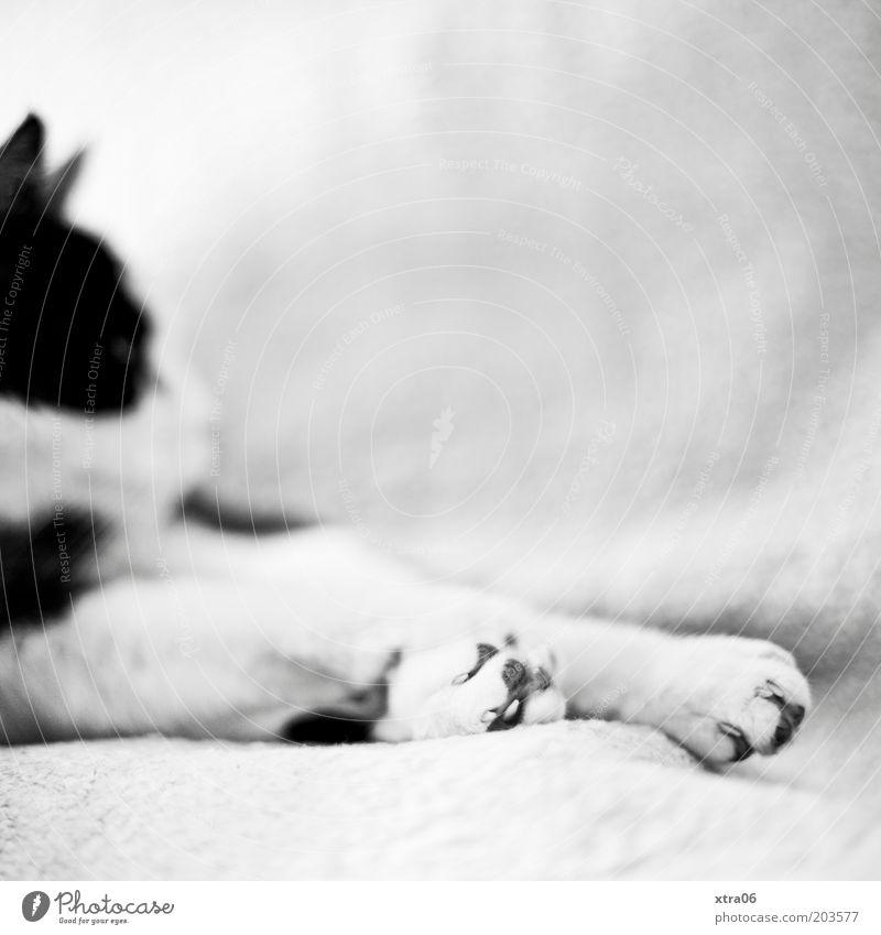 ein Kater namens Wolfgang Tier Erholung Katze Fell Pfote Haustier Krallen Trägheit faulenzen