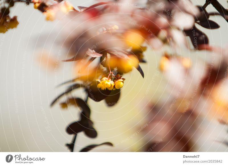 BlütenBlätter Umwelt Natur Landschaft Pflanze Tier Frühling Sommer Schönes Wetter Wärme Blume Sträucher Blatt Grünpflanze Wildpflanze Garten Park Stimmung