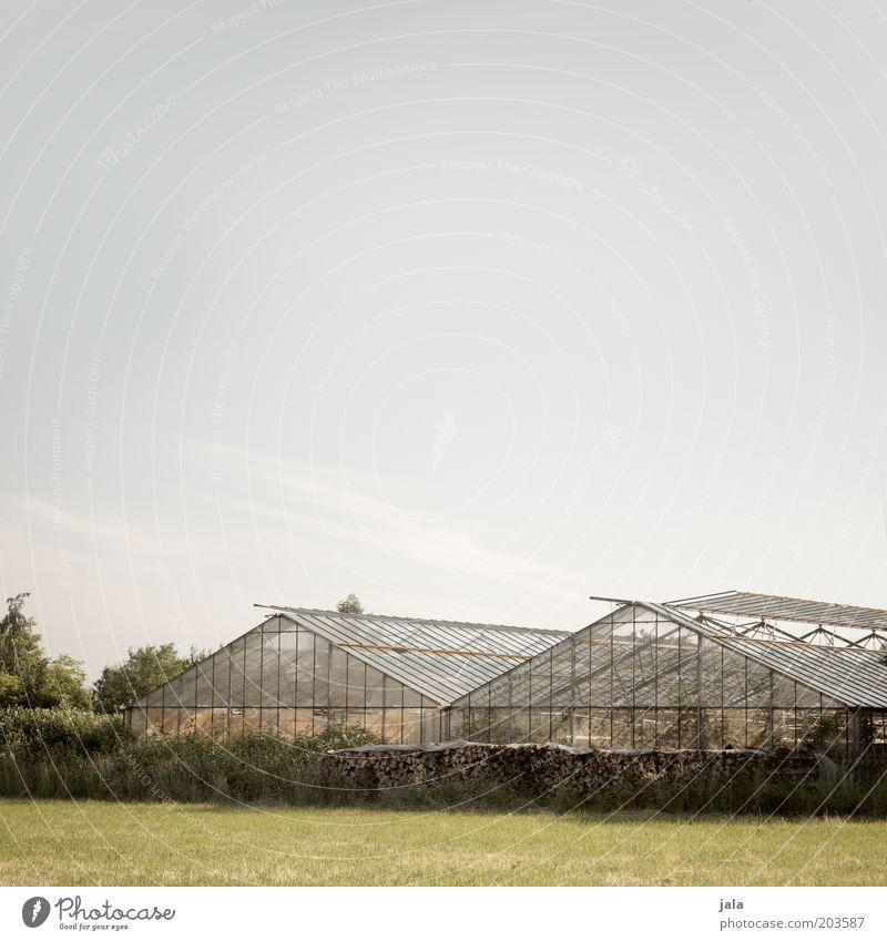 gärtnerei Arbeit & Erwerbstätigkeit Arbeitsplatz Unternehmen Gärtnerei Himmel Baum Sträucher Wiese Feld Gebäude Gewächshaus Holz Umwelt Außenaufnahme
