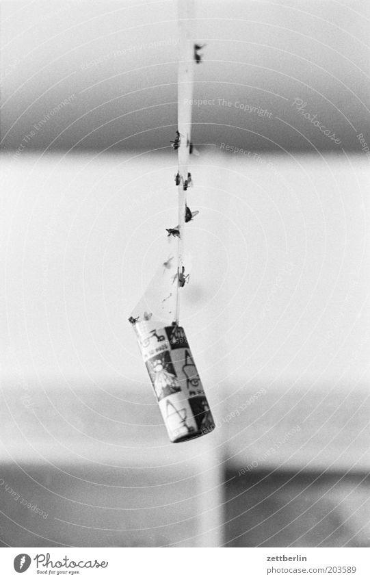 Galgenmännchen Fliege Schädlingsbekämpfung kleben Klebrig Klebeband Gift Schädlinge Wohnung Tod Fliegenfalle Insektenschutz