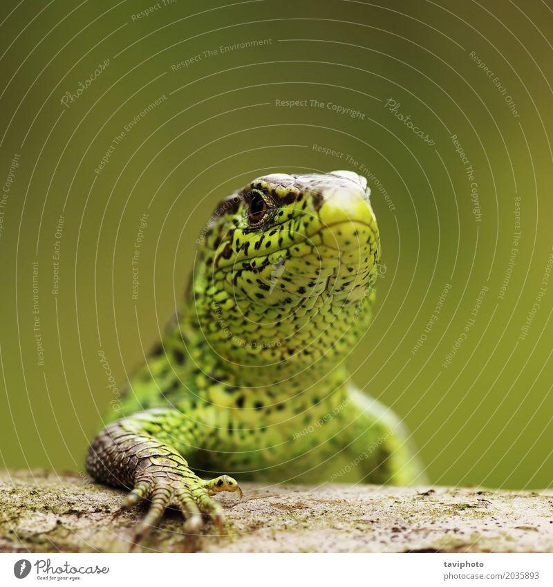 Natur Mann Sommer Farbe schön grün Tier Erwachsene Umwelt klein braun Sand wild Körper niedlich Schutz