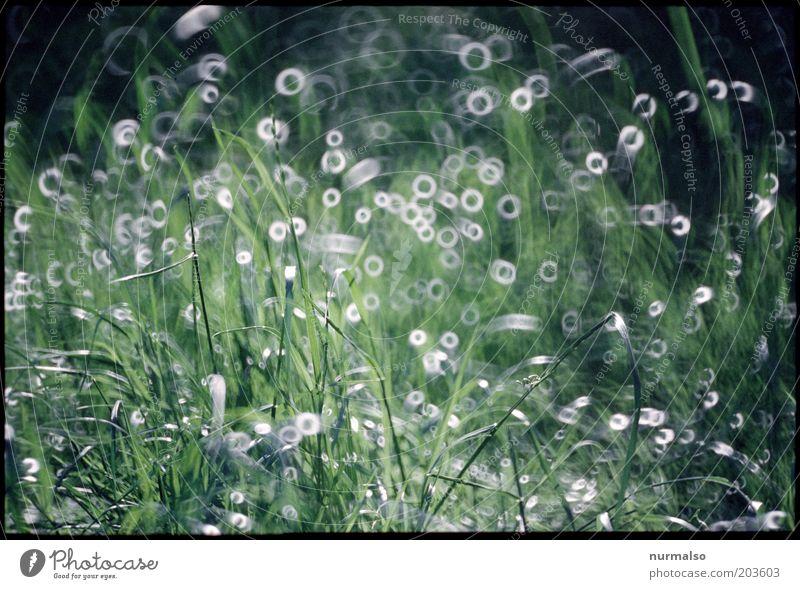 Gras nach Maß Kunst Umwelt Natur Landschaft Wassertropfen Schönes Wetter Pflanze Wiese glänzend Stimmung geheimnisvoll nachhaltig rein Surrealismus Farbfoto