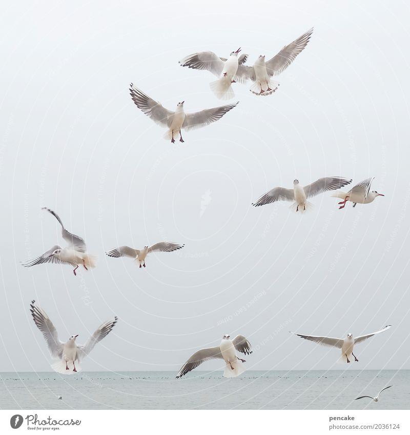 ausflug Natur Urelemente Wasser Himmel See Tier Wildtier Vogel Tiergruppe fliegen Bodensee Möwe Ausflug Farbfoto Gedeckte Farben Außenaufnahme Tierporträt