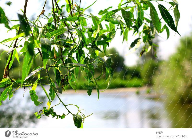 through the tree Umwelt Natur Pflanze Wasser Sommer Schönes Wetter Baum Blatt Park Seeufer hell schön grün Zufriedenheit ruhig Schutz beruhigend Farbfoto