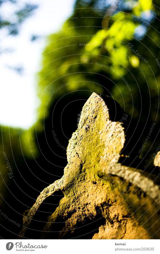 Grabstein-Spitze Umwelt Natur Sonnenlicht Sommer Klima Schönes Wetter Moos Friedhof Dekoration & Verzierung Kunstwerk leuchten hell gelb grün ruhig Trauer Tod