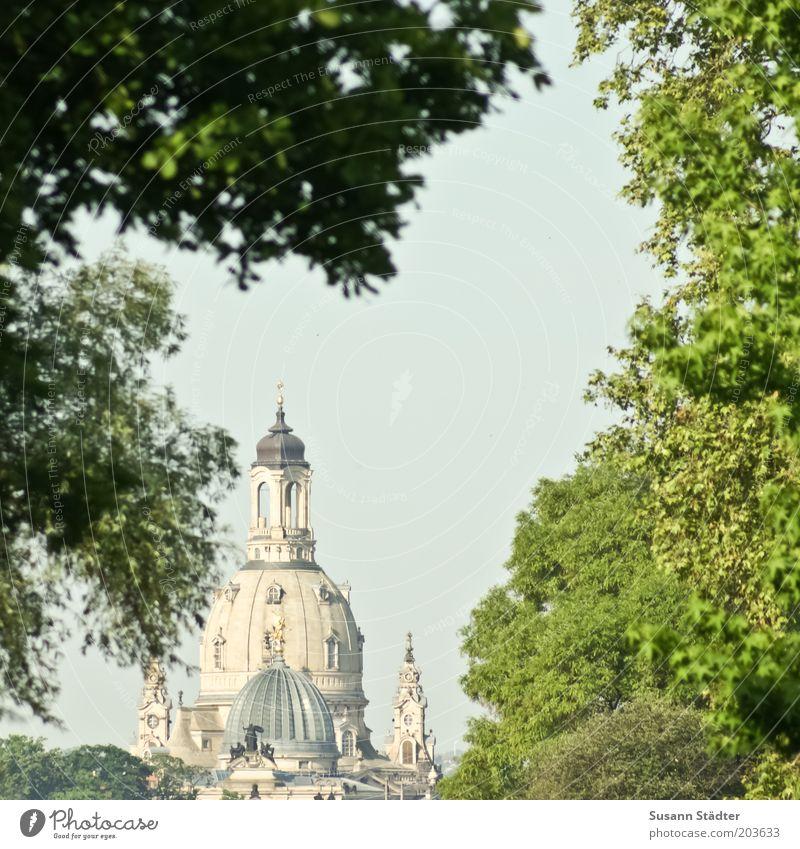 Zitronenpresse vor Frauenkirche Baum Ferien & Urlaub & Reisen Sommer Kirche leuchten Dach Dresden Aussicht Dom Sightseeing Sehenswürdigkeit Altstadt Kuppeldach Laubbaum Sandstein Schutz