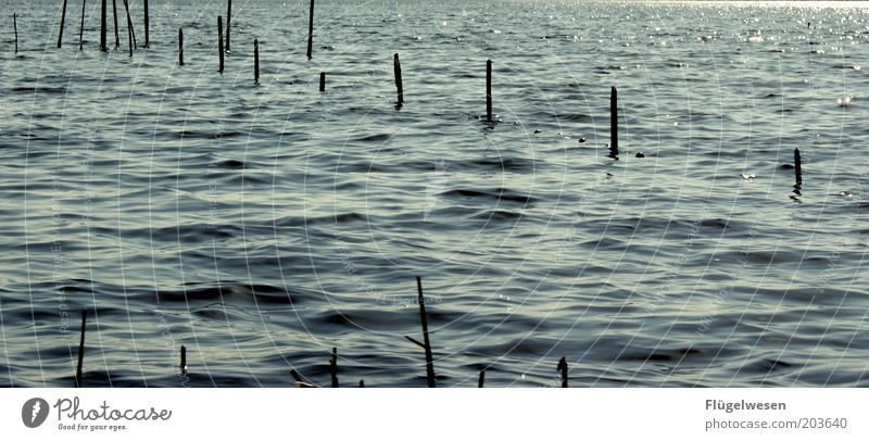 In See stechen Meer See Wellen Küste Fluss Netz Schutz fangen Seeufer Ostsee Nordsee Fischereiwirtschaft Kescher Reuse