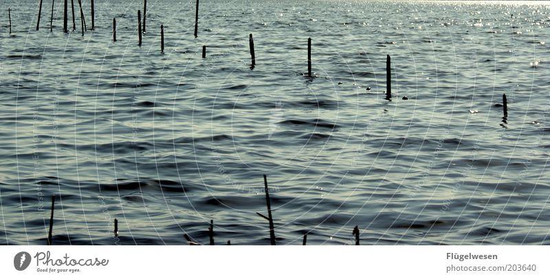 In See stechen Wellen Küste Seeufer Nordsee Ostsee Meer Fluss fangen Schutz Reuse Netz Fischereiwirtschaft Kescher Farbfoto Tag Menschenleer