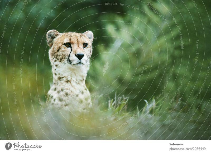 im Visier Natur Ferien & Urlaub & Reisen Sommer Tier Umwelt Wiese natürlich Gras Tourismus frei Ausflug Wildtier Sträucher Abenteuer beobachten Fernweh