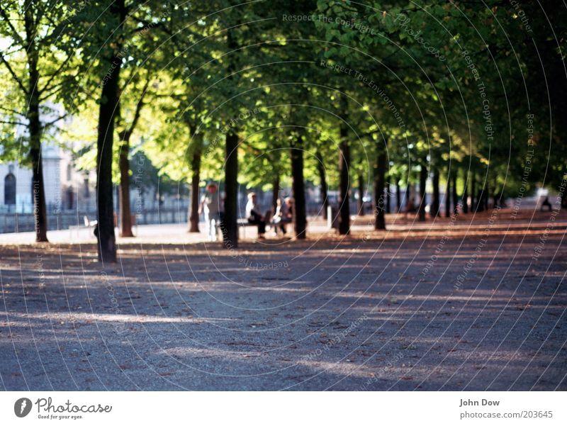 Eine Straße, viele Bäume (...) Mensch Baum Pflanze Berlin Erholung Wege & Pfade Park Tourismus Pause Spaziergang Freizeit & Hobby Baumstamm Schönes Wetter Tourist Geborgenheit