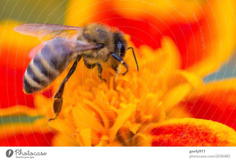 Voll dabei.... Natur Pflanze Sommer schön Landschaft Blume rot Blatt Tier Umwelt gelb Blüte Frühling Wiese natürlich Garten
