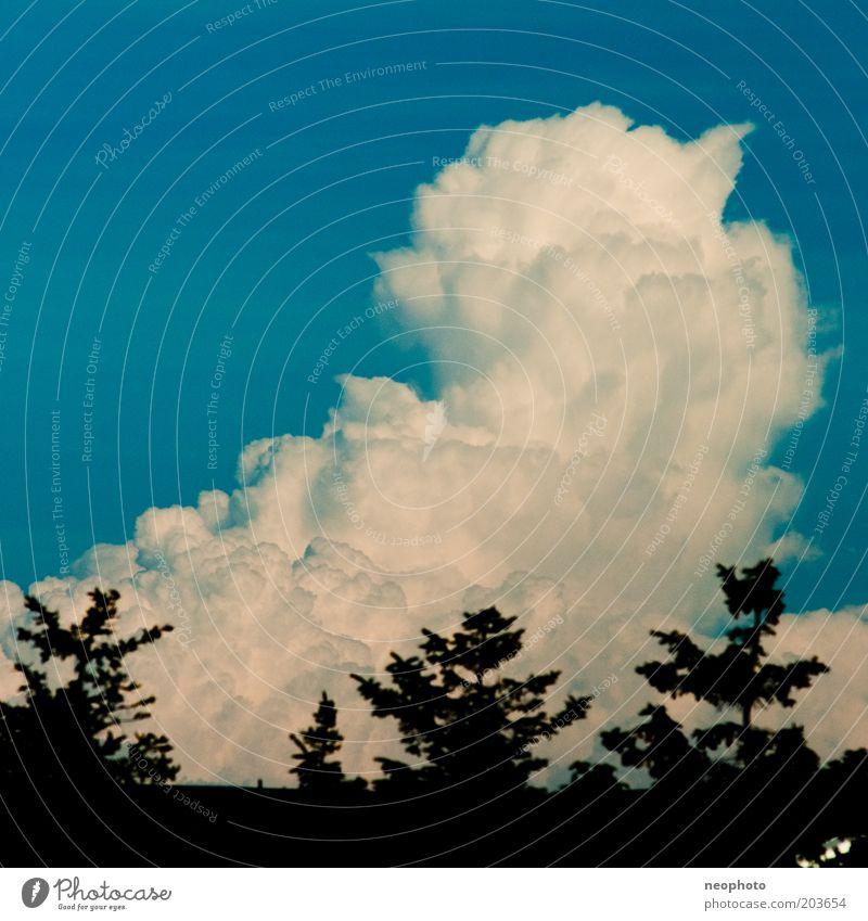 Wolke 7 Himmel weiß blau schwarz Wolken Wetter Kumulus Nadelbaum Baum auftürmen
