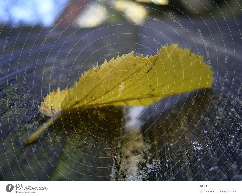 Herbstblatt Blatt gelb Sägezahn