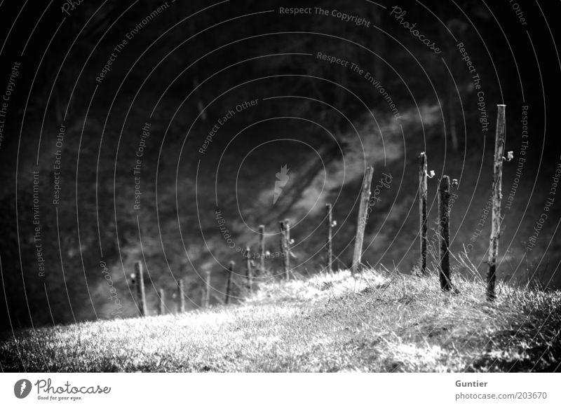 Dreizehn Pfähle Umwelt Natur Landschaft Sommer Gras grau schwarz weiß Holzpfahl Zaunpfahl Begrenzung Grenze Grenzgebiet bedrohlich Weide Weidezaun Wiese