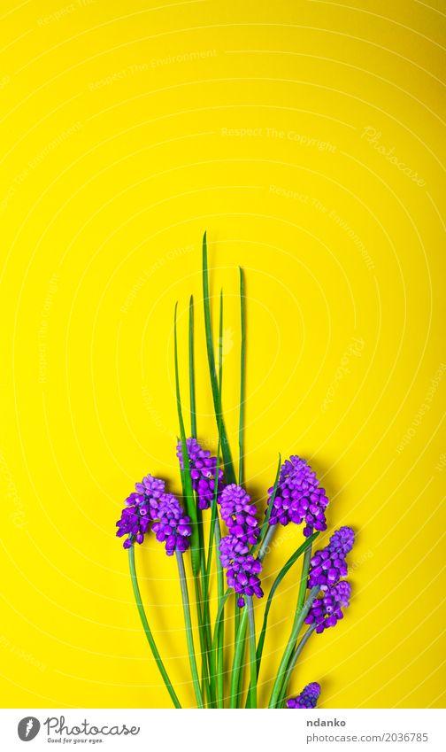 Frühlingsblumen auf einer gelben Oberfläche schön Sommer Dekoration & Verzierung Muttertag Natur Pflanze Blume Blatt Blüte Blumenstrauß frisch hell grün violett
